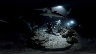 Vidéo 360° : nagez avec... 700 requins !