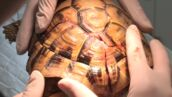 Exclu. Véto de choc (W9) : ils vont tout tenter pour sauver cette tortue dont la carapace a été brisée ! (VIDEO)