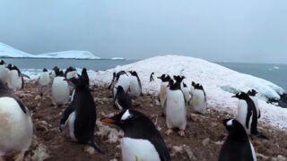 Vidéo 360° : embarquez pour une superbe découverte de l'Antarctique