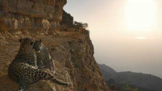 """Netflix : pourquoi il faut absolument regarder """"Notre planète"""", l'incroyable série documentaire !"""