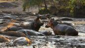 National Geographic : Planète hostile, la nouvelle série documentaire racontée par Bear Grylls