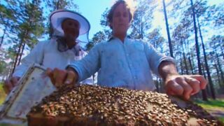 Vidéo 360 : plongée immersive au coeur d'une ruche... sur le dos d'une abeille !