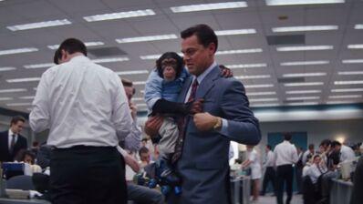 Le chimpanzé du Loup de Wall Street en danger : Martin Scorsese et Leonardo DiCaprio priés de le sauver