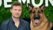 Rex : le chien policier bientôt de retour sur France Télévisions dans un remake !