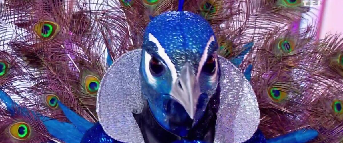 Mask Singer : le paon identifié par les internautes, il s'agirait d'un célèbre footballeur