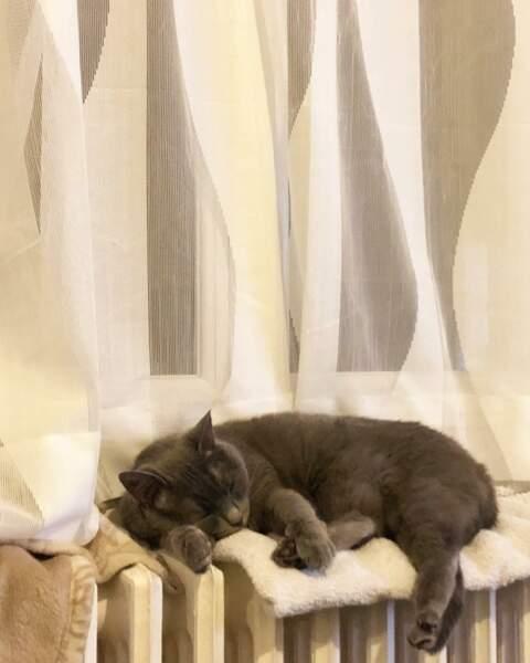 Agathe Auproux est fan de son chat et le photographie sous toutes les coutures...