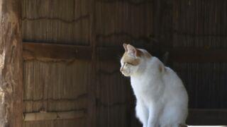 Chiens et chats : comment bien s'en occuper en restant chez soi ?