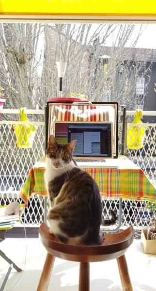 Turbo, le chat de Caroline, profite lui du soleil sur la terrasse pendant que sa maîtresse travaille...