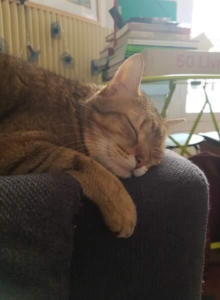 On aimerait bien faire la sieste comme Tchekhov, le chat d'Ophélie...