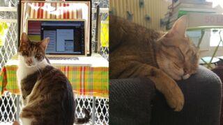 Confinement : découvrez en images le quotidien des journalistes de la rédaction de Télé-Loisirs (et de leurs animaux de compagnie) ! (PHOTOS)