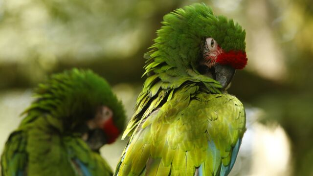 Une saison au zoo (France 4) : soixante animaux tués dans un incendie au Zoo de la Flèche - actu - Télé 2 sema
