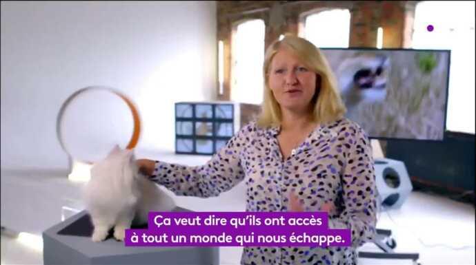 Vidéos Chats des villes et chats des champs , Documentaire , Télé,Loisirs