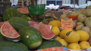 Melon, pastèque, duel au soleil