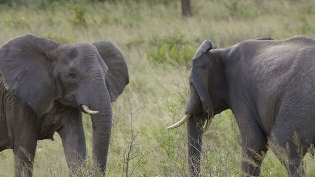 Les animaux emblématiques d'Afrique