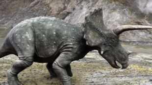 Les aventures des Ceratops