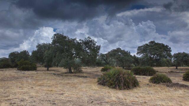 L'Espagne sauvage : La Dehesa