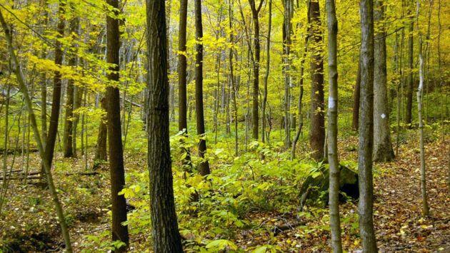 Un monde sans forêts