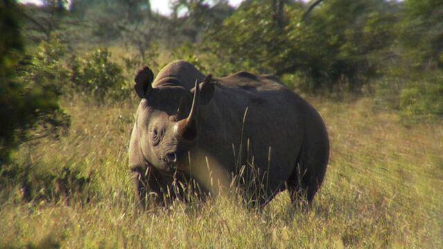 Journal d'une réserve africaine