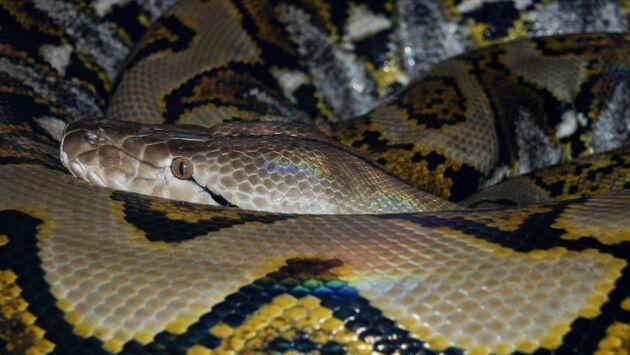 Les secrets des serpents