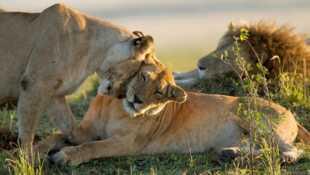 Le clan des lionnes