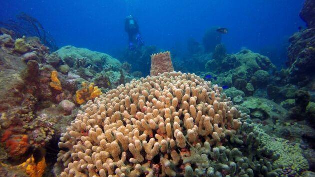 Martinique, à la recherche des trésors de la mer