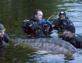 Le mystère du Loch Ness