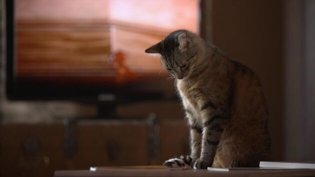 Le jeu du chat et de la souris