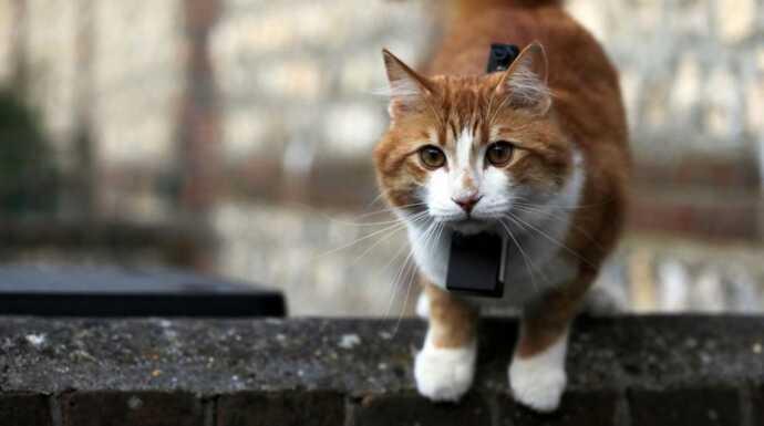 Chats des villes et chats des champs  La communication féline episode 3 ,  Documentaire , Télé,Loisirs