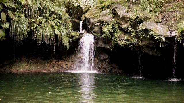 Sur la route des cascades de Guadeloupe