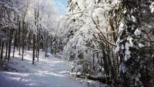 France terres sauvages La forêt