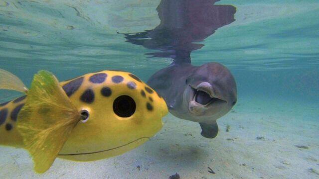 Espions chez les dauphins et les orques