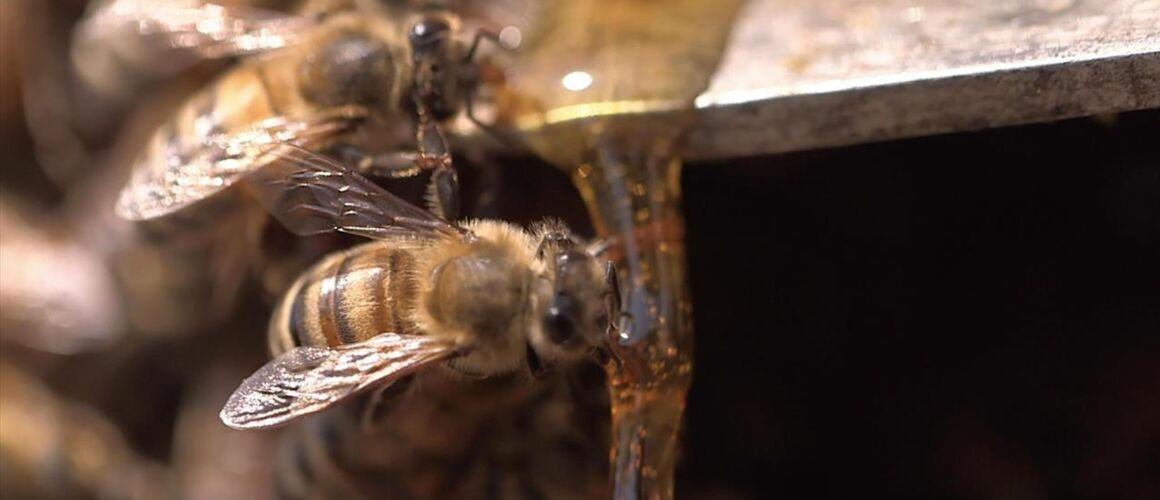 La bataille du miel : 10/11/2019 à 20h50 sur France 5 - Télé-Loisirs