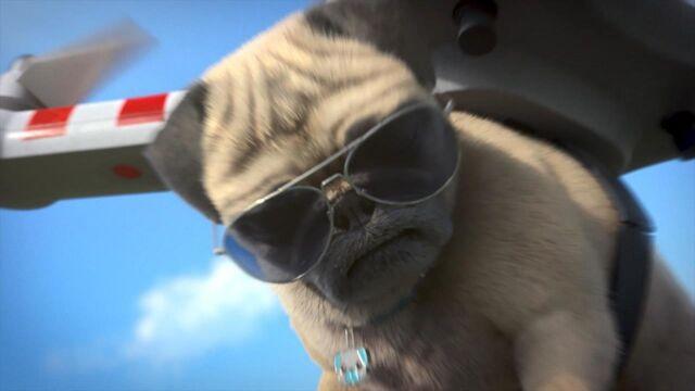 Mike, une vie de chien