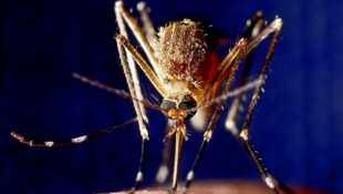 Sus aux moustiques !