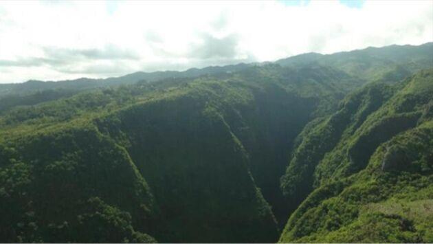 Ile de La Réunion : au secours des plantes