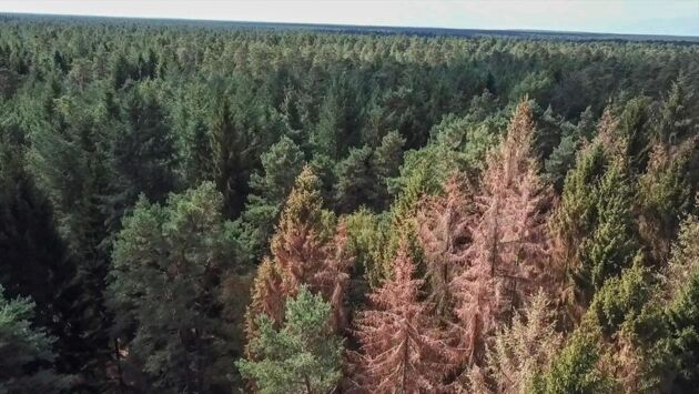 Sauvons nos forêts