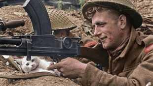 39-45, les animaux dans la guerre
