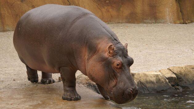Chroniques du zoo de Londres
