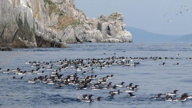 Russie sauvage : la mer d'Okhotsk