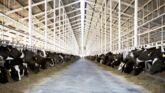Culture Infos : La planète lait