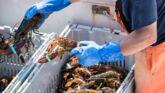 Culture Infos : Homards : pêche à haut risque