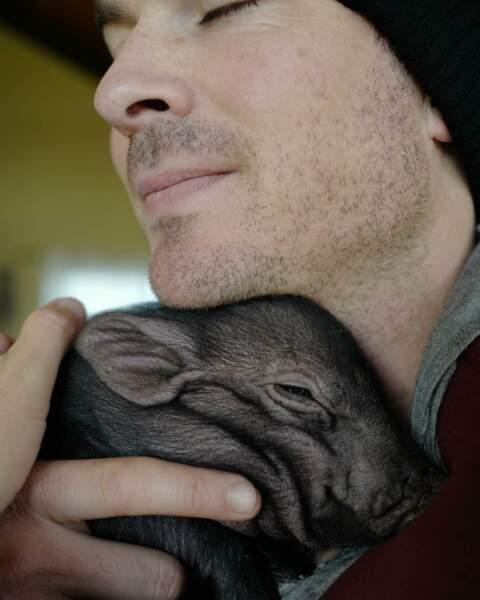 … aux association de protection des animaux