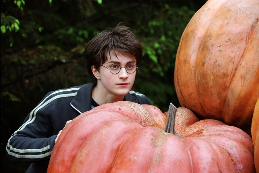 Petit cache-cache Harry ?
