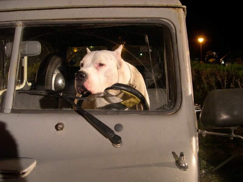 BOMBON EL PERRO (2004) : ce dogue argentin va rendre à son maître sa fierté perdue