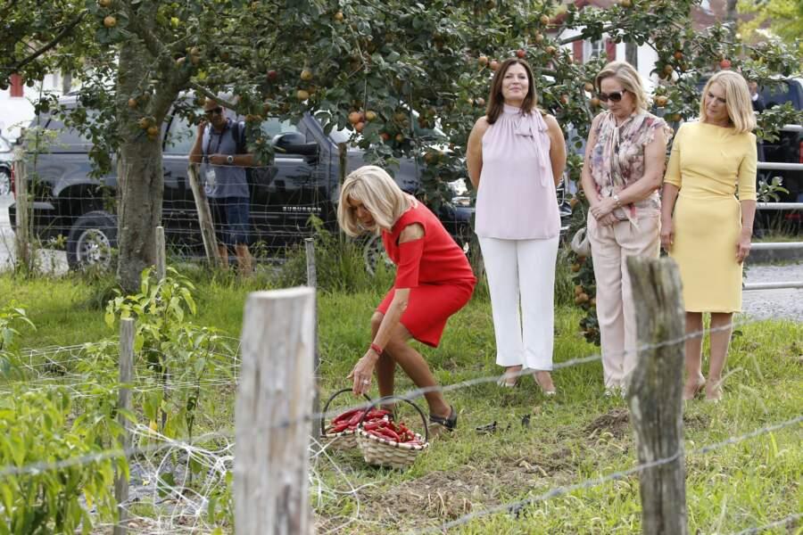 Brigitte Macron n'avait plus qu'à se baisser pour ramasser les fameux piments