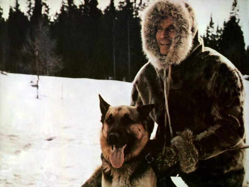 L'APPEL DE LA FORET (1972) : Le chien Buck retrouve ses instincts aux côtés de son maître Charlton Heston