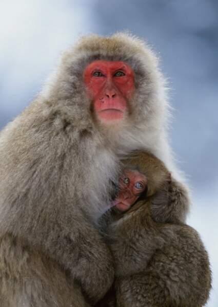 Pas de doute, les singes nous ressemblent beaucoup !