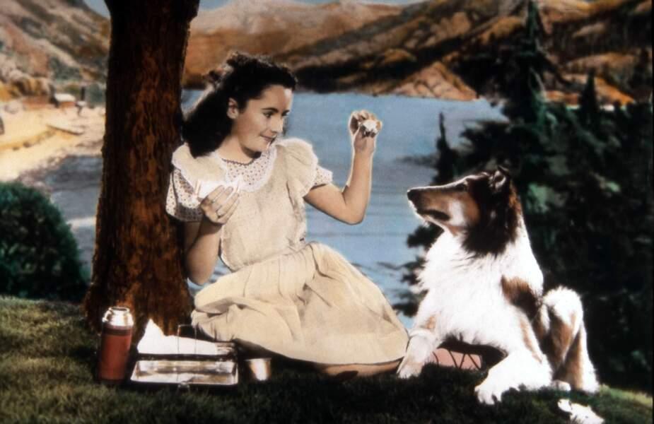 LE COURAGE DE LASSIE (1946) : … qui a débuté sa carrière ciné avec la jeune Elizabeth Taylor