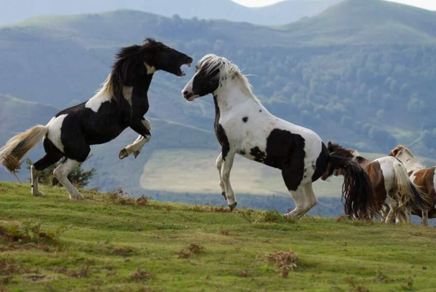 On commence avec ces deux jolis chevaux