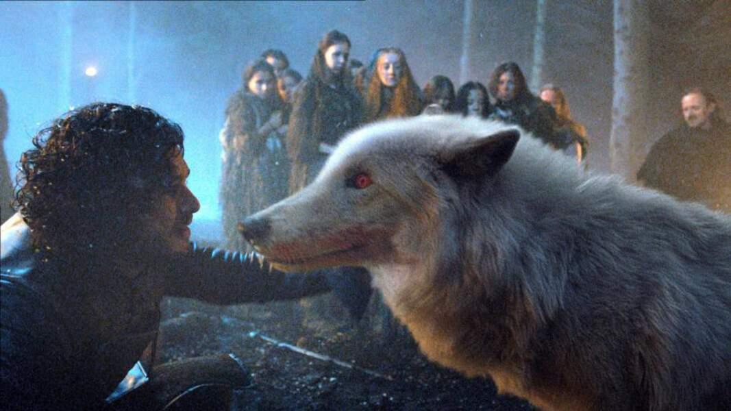 Fantôme, le loup blanc de Jon Snow dans Game of Thrones